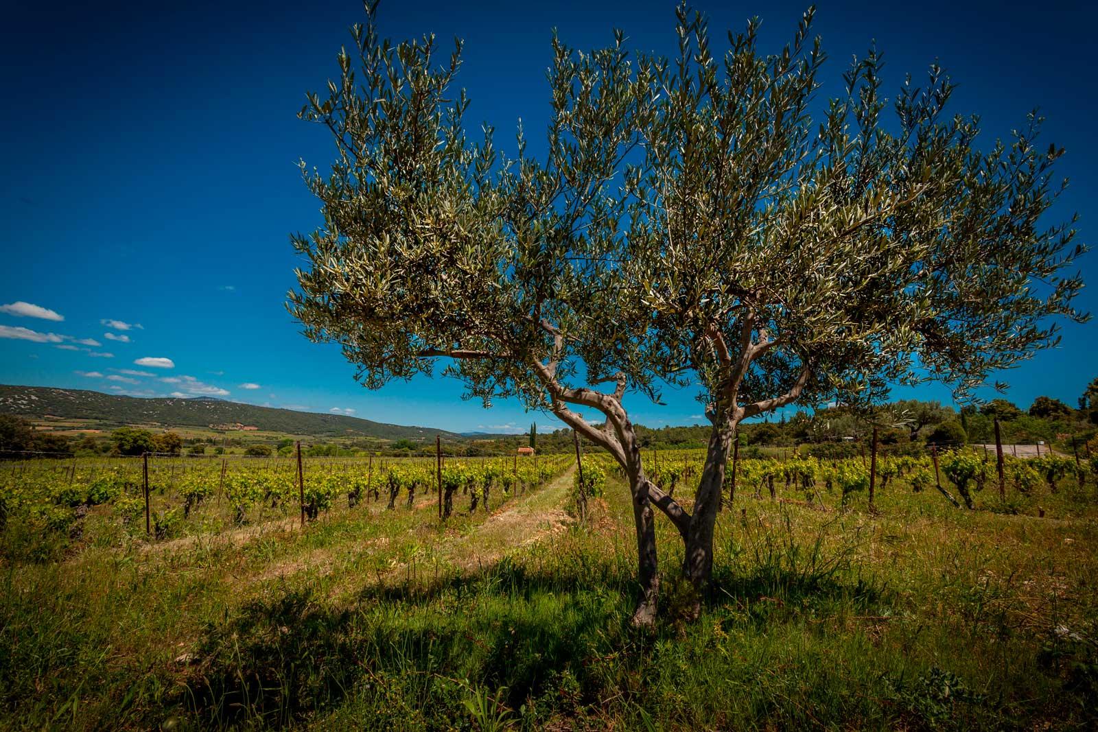 mas-seranne-vin-vente-domaine-degustation-caves-bio-languedoc_Venture_photo_Petiot_new1b