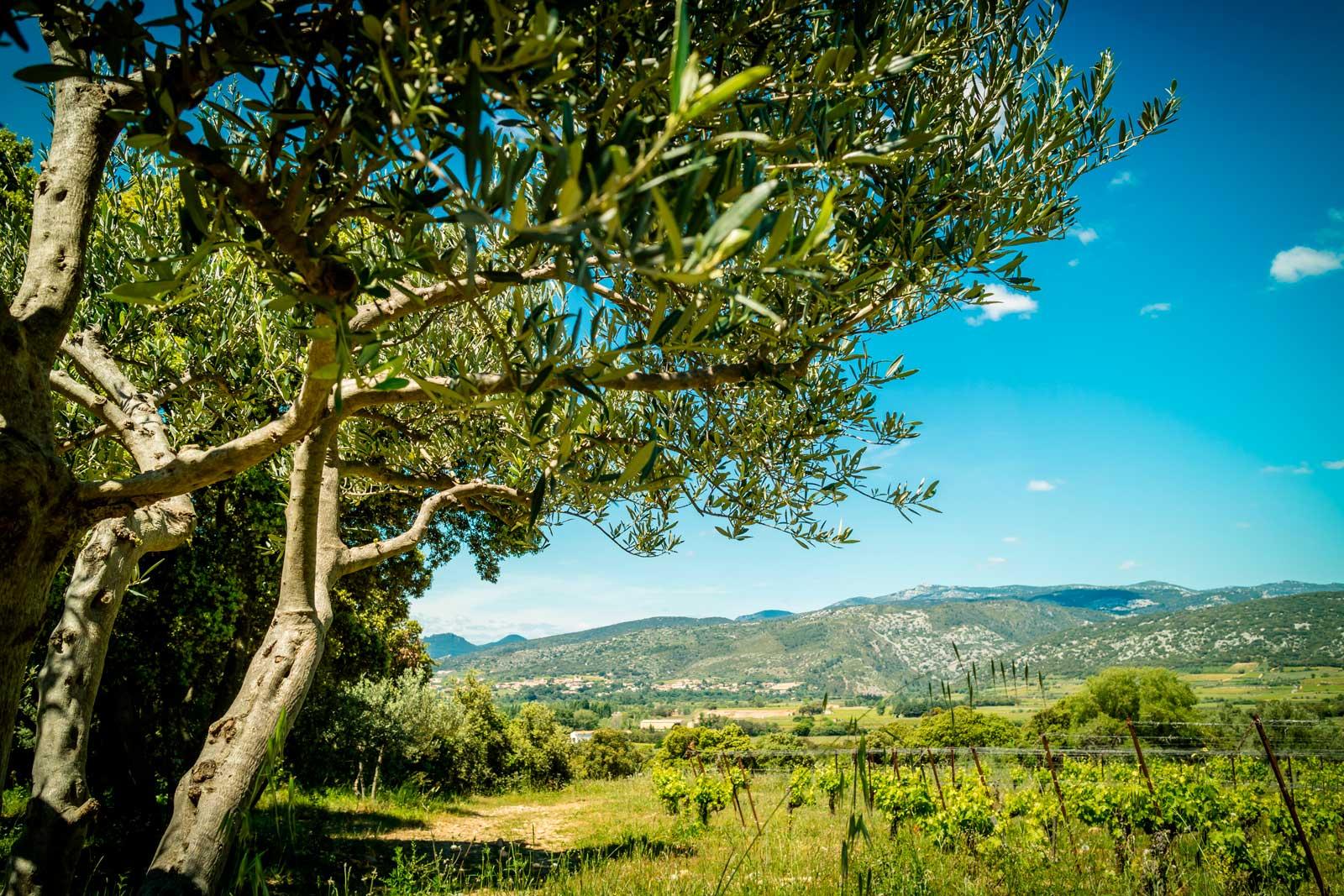 mas-seranne-vin-vente-domaine-degustation-caves-bio-languedoc_Venture_photo_Petiot_new6